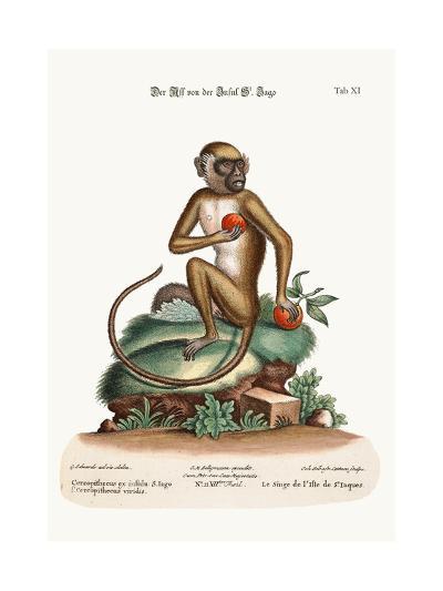 The St. Jago Monkey, 1749-73-George Edwards-Giclee Print