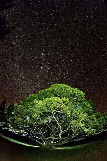 The Starry Sky of the Milky Way Is Visible over a Fig Tree on the Island of Molokai, Hawaii-Jonathan Kingston-Photographic Print