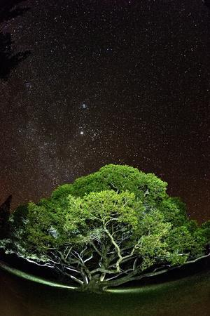 https://imgc.artprintimages.com/img/print/the-starry-sky-of-the-milky-way-is-visible-over-a-fig-tree-on-the-island-of-molokai-hawaii_u-l-pwdr1x0.jpg?p=0