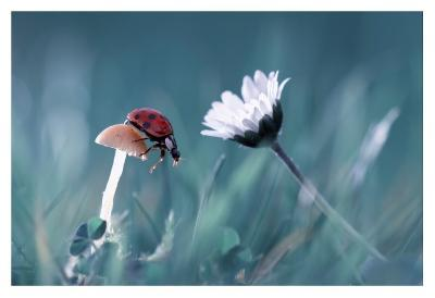 The Story Of The Lady Bug That Tries To Convice The Mushroom To Have A Date With The Beautiful Dais-Fabien Bravin-Giclee Print