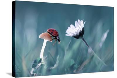 The Story Of The Lady Bug That Tries To Convice The Mushroom To Have A Date With The Beautiful Dais-Fabien Bravin-Stretched Canvas Print