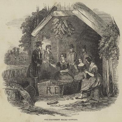 The Strawberry Trade, Pottling--Giclee Print