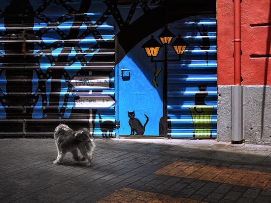 The Street Cats.-Juan Luis-Photographic Print
