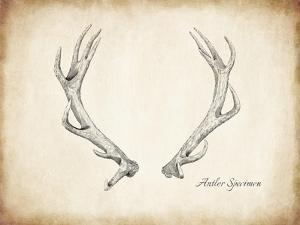 Antler Specimen A by THE Studio
