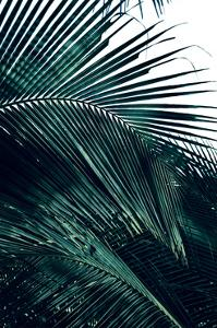 Contemporary Palm Leaves 2 by THE Studio