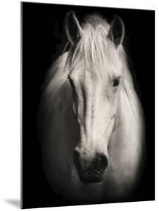 Equus 1 by THE Studio