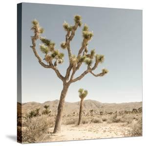 Joshua Tree 1 by THE Studio
