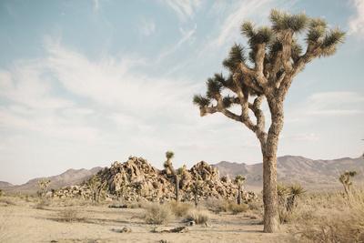 Joshua Tree 3