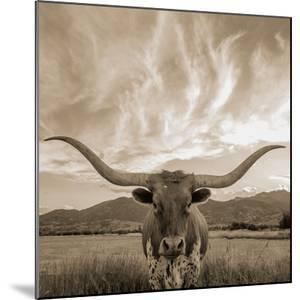 Longhorn by THE Studio