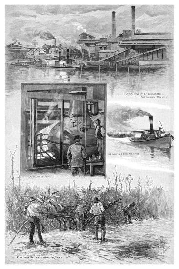The Sugar Industry, Richmond River, New South Wales, Australia, 1886-JR Ashton-Giclee Print