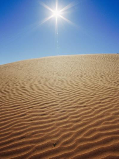 The Sun Beats Down on a Sand Dune-Jason Edwards-Photographic Print