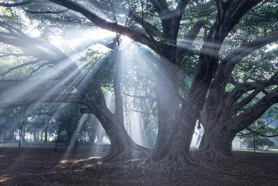 The Sun's Rays Shine Through Trees in Mist in Ibirapuera Park-Alex Saberi-Photographic Print