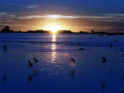 The Sun Sets as Sea Gulls Flies Over Flooded Argentina's Pampas--Photographic Print