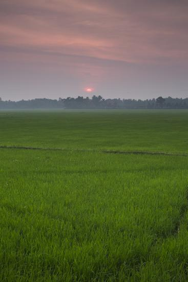 The Sun Sets over a Field in the Backwaters of India-Kelley Miller-Photographic Print