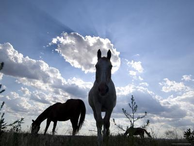 The Sun Shines Through Clouds on Some Horses in Burwell, Nebraska-Joel Sartore-Photographic Print