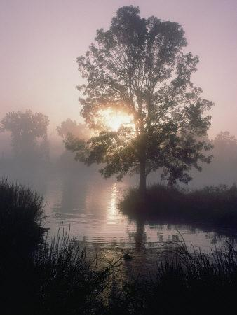 https://imgc.artprintimages.com/img/print/the-sun-shines-through-early-morning-fog-onto-water-bordered-by-trees-and-high-grass_u-l-p4tt590.jpg?p=0