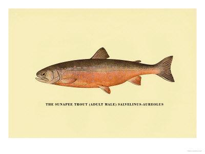 https://imgc.artprintimages.com/img/print/the-sunapee-trout_u-l-p2dd0e0.jpg?p=0