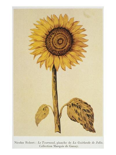The Sunflower-Nicolas Robert-Giclee Print