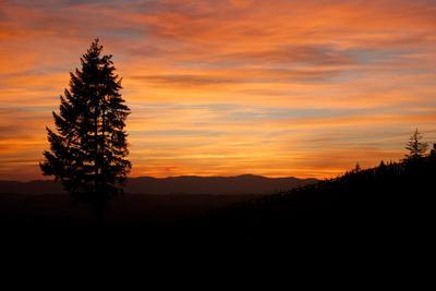 https://imgc.artprintimages.com/img/print/the-sunset-over-a-vineyard-in-tualatin-valley-oregon_u-l-pncogk0.jpg?p=0