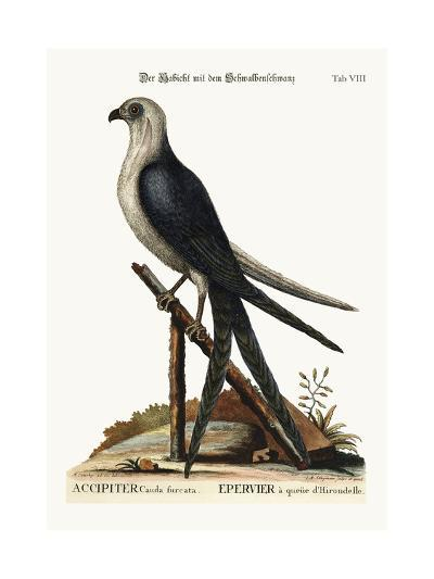The Swallow-Tail Hawk, 1749-73-Mark Catesby-Giclee Print