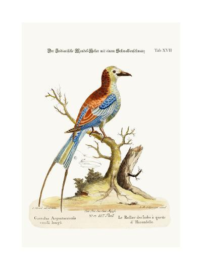 The Swallow-Tailed Indian Roller, 1749-73-George Edwards-Giclee Print