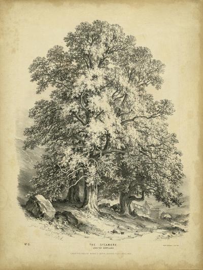 The Sycamore-George Barnard-Art Print