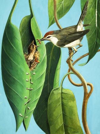 https://imgc.artprintimages.com/img/print/the-tailor-bird-1970_u-l-pchk3k0.jpg?p=0