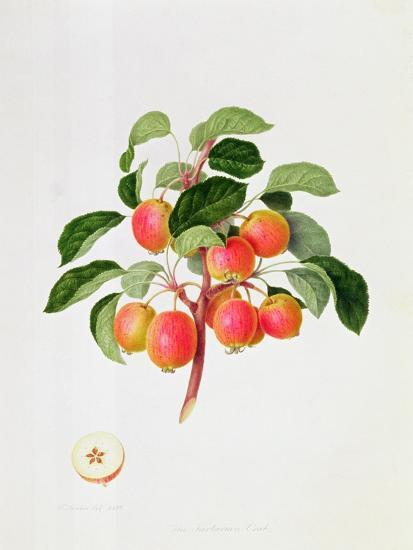 The Tartarian Crab Apple, 1819-William Hooker-Giclee Print
