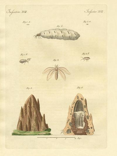 The Termites--Giclee Print
