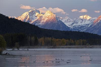The Teton Range and the Snake River at Sunrise. a Flock of Canada Geese Rest in the River-Marc Moritsch-Photographic Print