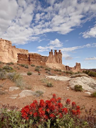 The Three Gossips and Common Paintbrush (Castilleja Chromosa), Arches National Park, Utah, USA-James Hager-Photographic Print