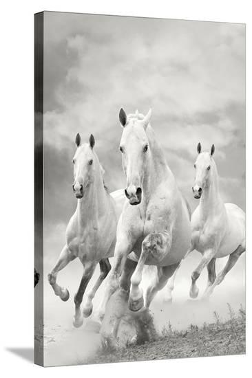 The Three Graces--Stretched Canvas Print