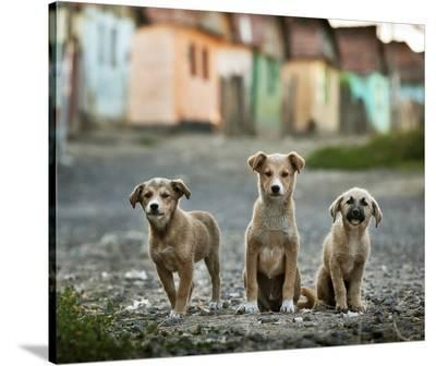 The Three Musketeers-Sorin Onisor-Stretched Canvas Print