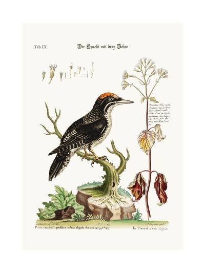 The Three-Toed Woodpecker, 1749-73-George Edwards-Giclee Print