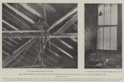 The Thrush's Nest in the Crystal Palace Telegraph-Office Through Which the Cup-Tie Telegrams Passed--Giclee Print