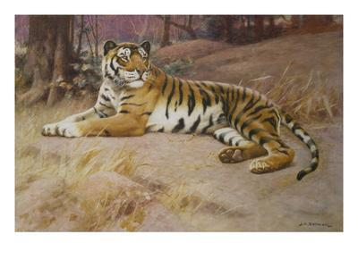 https://imgc.artprintimages.com/img/print/the-tiger_u-l-peolsb0.jpg?p=0