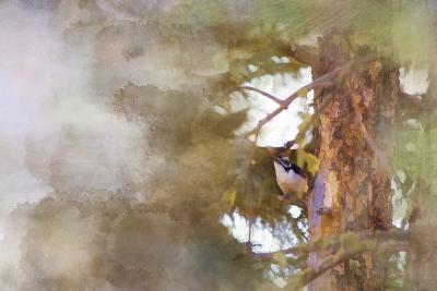 The Tiny Woodpecker-Roberta Murray-Photographic Print