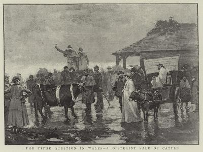 The Tithe Question in Wales, a Distraint Sale of Cattle--Giclee Print