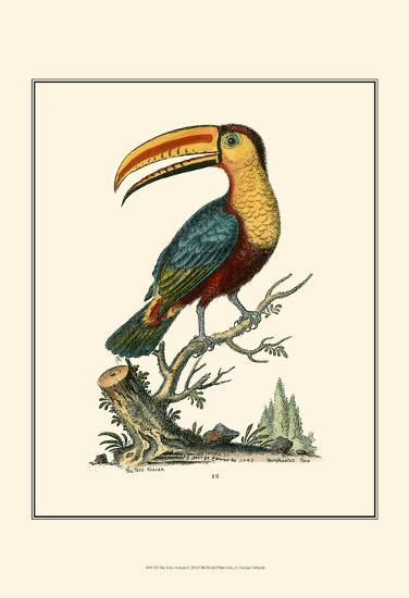 The Toco Toucan-George Edwards-Art Print