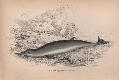 The Toothless Whale of Havre-Robert Hamilton-Giclee Print