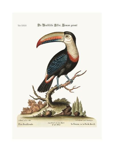 The Toucan or Brasilian Pye, 1749-73-George Edwards-Giclee Print