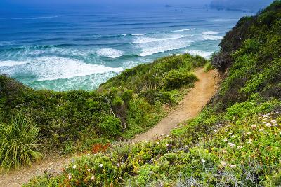 The Trail to Sand Dollar Beach, Los Padres National Forest, Big Sur, California, Usa-Russ Bishop-Photographic Print
