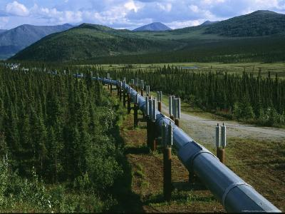 The Trans-Alaska Pipeline Runs Through the Alaskan Wilderness-Melissa Farlow-Photographic Print