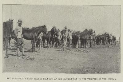 The Transvaal Crisis, Horses Brought Up for Distribution to the Troopers of the Column--Giclee Print