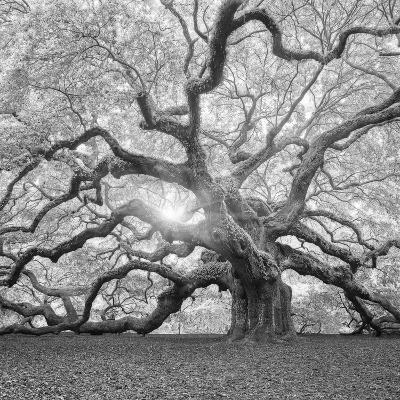 The Tree Square-BW 2-Moises Levy-Photographic Print