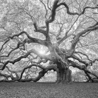https://imgc.artprintimages.com/img/print/the-tree-square-bw-2_u-l-q12ulvo0.jpg?p=0