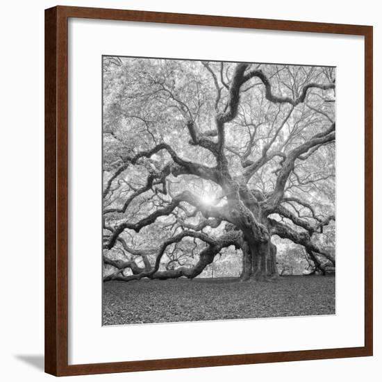 The Tree Square-BW 2-Moises Levy-Framed Photographic Print