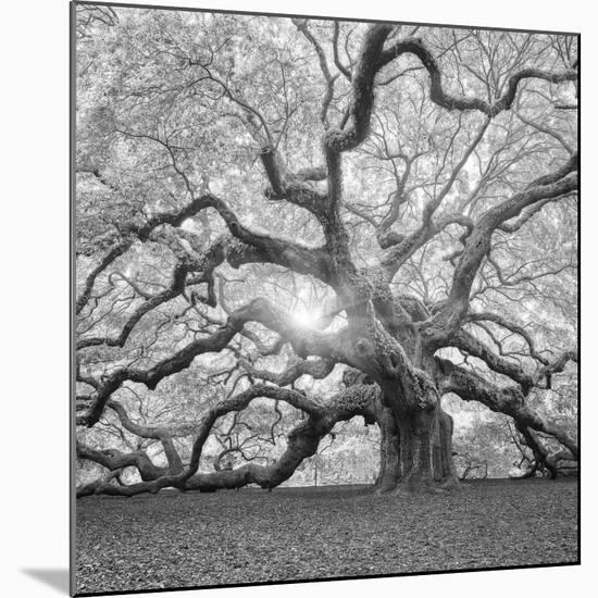 The Tree Square-BW 2-Moises Levy-Mounted Photographic Print