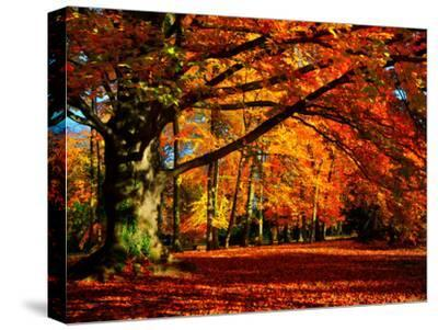 The Tree-Philippe Sainte-Laudy-Stretched Canvas Print