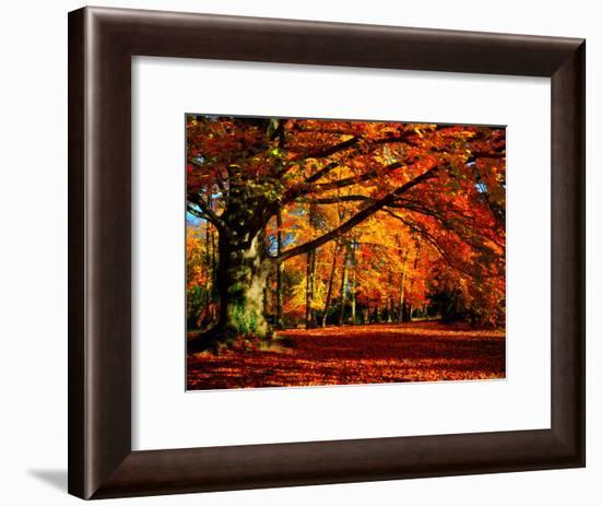 The Tree-Philippe Sainte-Laudy-Framed Photographic Print